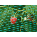 Bird Netting Olirete 6m Wide