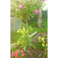 Rose Twistake Large - Black