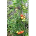 TOMTWIST Tomato Stake Jumbo